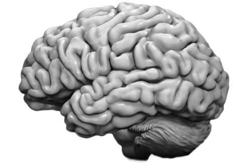 Hjärna - Studier under åren